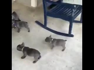 Cat vs dogs
