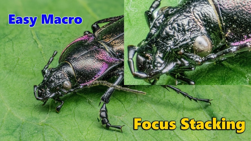 Easy MACRO Macro Stacking for beginners fastest way in 5 minutes