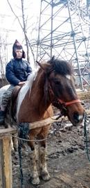 Романс и маленький всадник) 😊 Любовь к лошадям в крови 💓🐎 #пегий_конь #Романс_и_Валентин #конный_дво