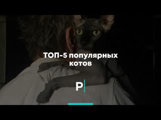 Топ-5 популярных котов