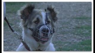 В Армавире проверили соблюдение правил выгула собак