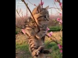 Весна пришла - коты прилетели!