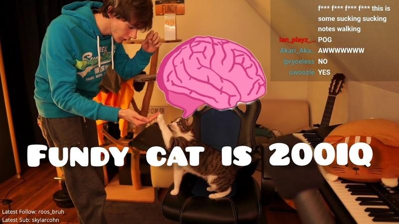 Fundy Cat Boots is 200 IQ Big Brain Cat Moment