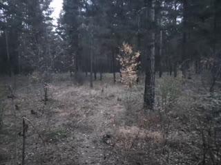 В лес за открытием сердца