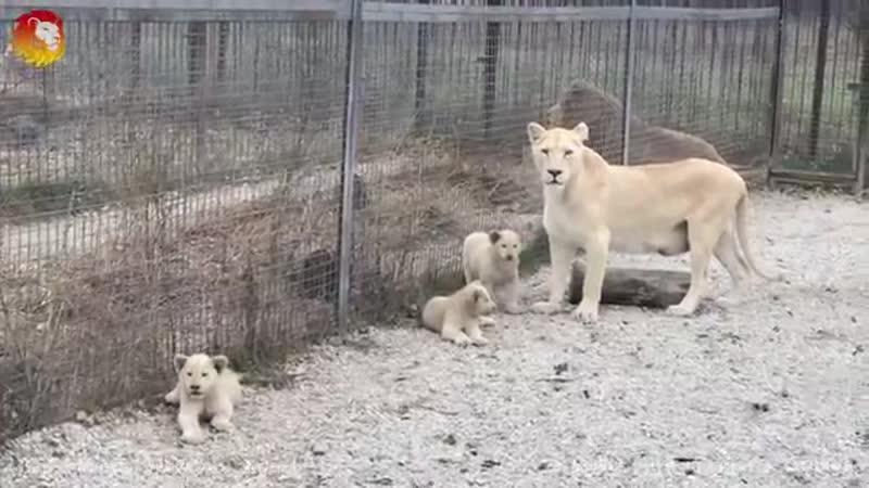 Мамы разные нужны мамы разные важны Тайган