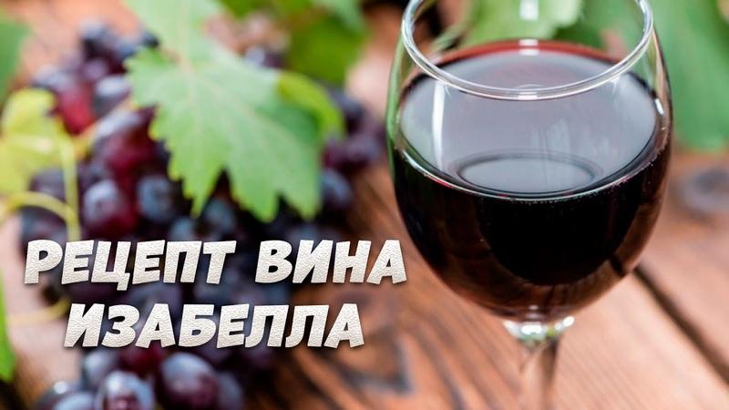 Домашнее вино из винограда изабелла пошаговый рецепт от А до Я