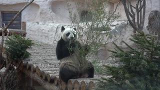 #Москвастобой - Обзорная экскурсия по Московскому зоопарку