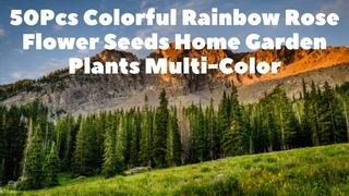50Pcs Colorful Rainbow Rose Flower Seeds Home Garden Plants Multi Color