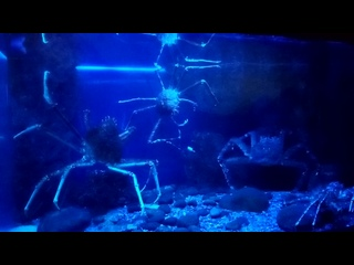 Крабы океанариум