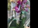 Видео от Цветочнаи Лавки
