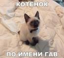 Персональный фотоальбом Анастасии Мешковой