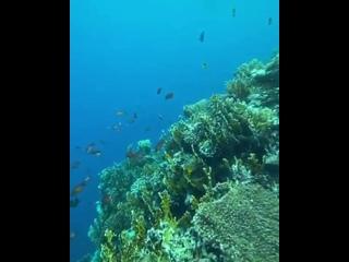 Лучшее подводное место с красочными и величественными жителями Красного моря