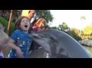 Дельфин укусил восьмилетнюю девочку в океанариуме SeaWorld /Dolphin bites eight-year-old girl at SeaWorld