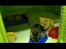 Котята дачники ищут дом