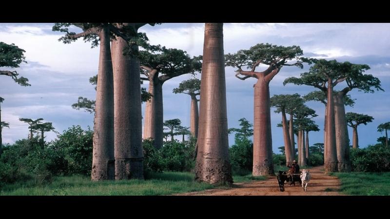 В дебрях Африки Мадагаскар Остров чудовищ