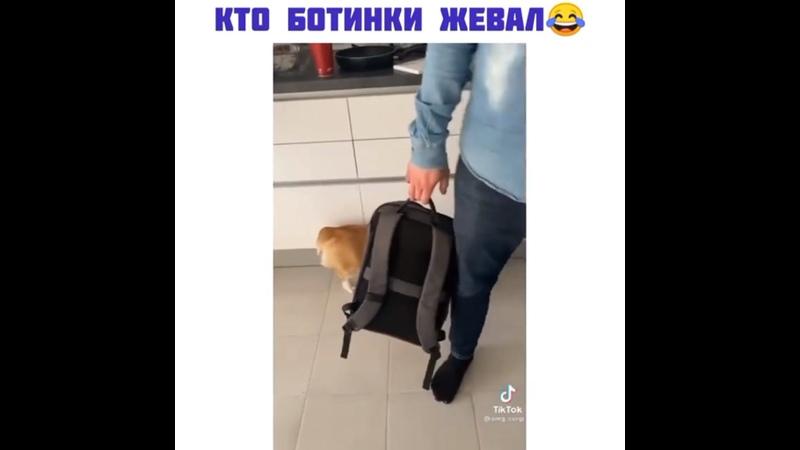 Видео от Ольги Вознесенскаи