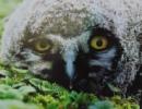 Личный фотоальбом Евгения Атапина