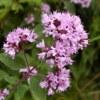 Лечебные травы   Чайные смеси   Экокосметика