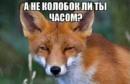 Фотоальбом Татьяны Астаховой