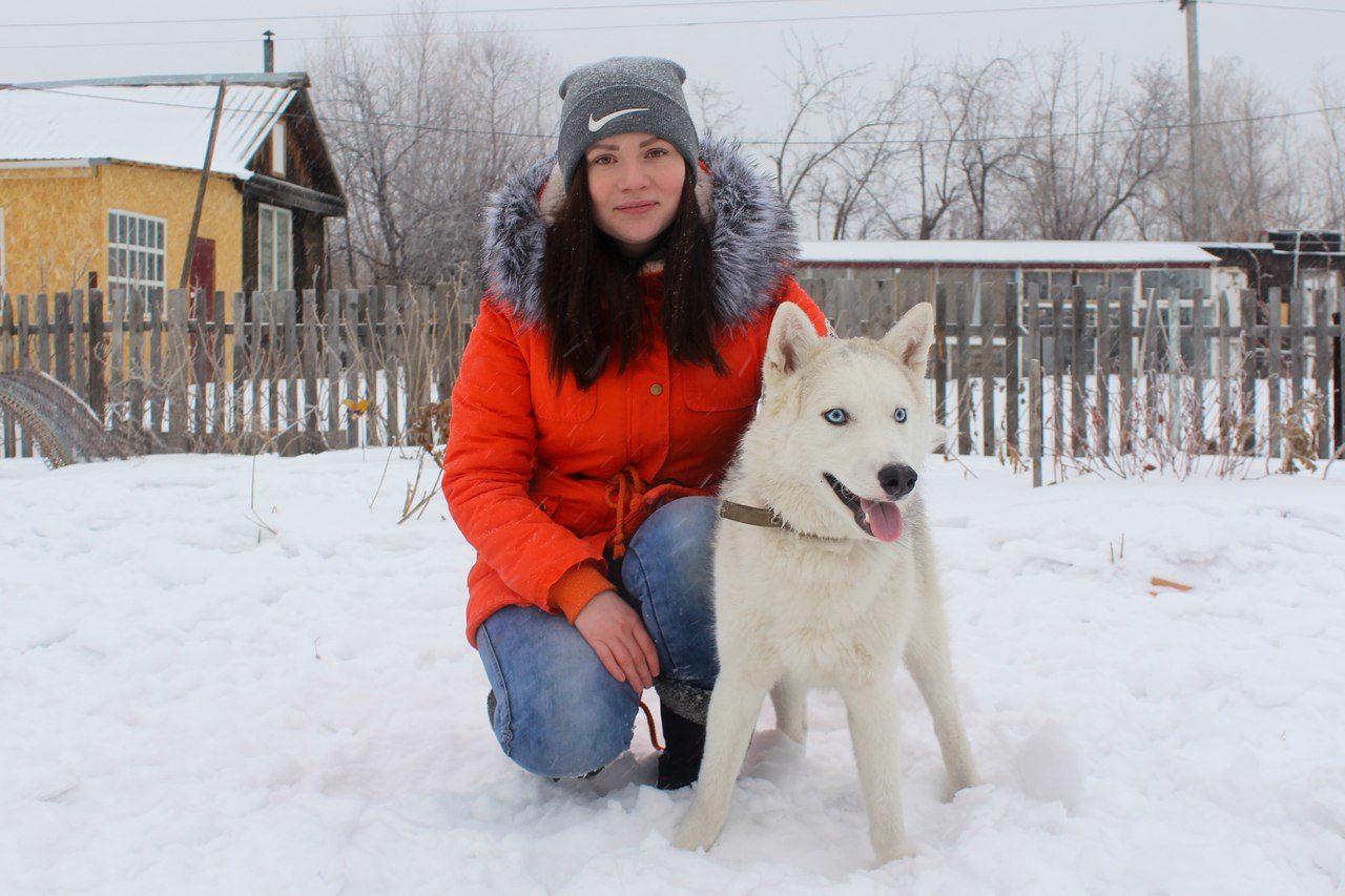 Марсель (сибирский хаски),  Владелица: Светлана
