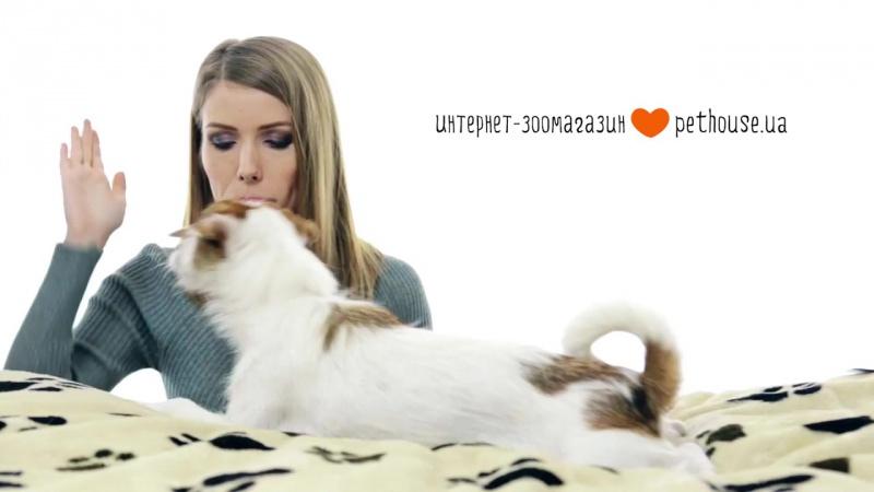 Ошейник от блох и клещей для собак и кошек Bayer Foresto