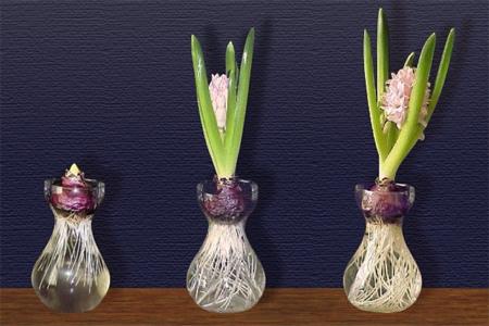Цветущий подоконник круглый год., изображение №1