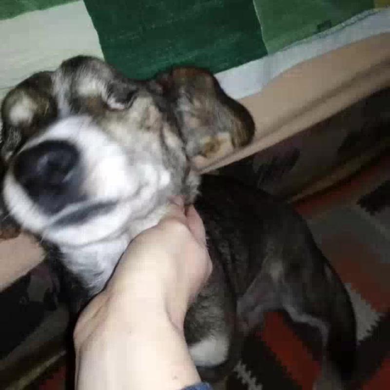PhotoGrid_Video_1544781448984.mp4