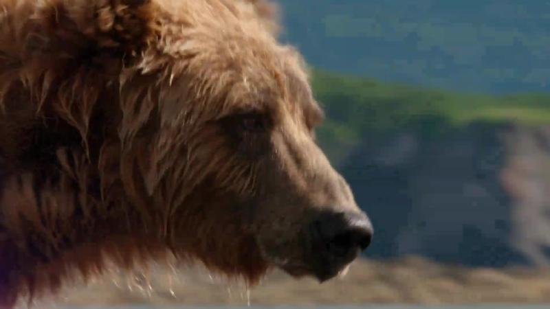 BBC Охота Гонка на время Побережья