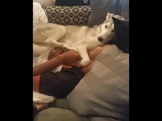 Собака отказывается покидать уютное место возле хозяина