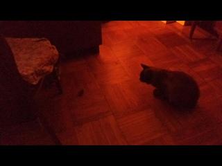 Сёма и Соня (Играют с заводной мухой)