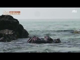 Hyoris Bed And Breakfast Episode 13 English sub