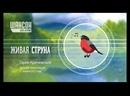 Гарик Кричевский - Прямая трансляция на Радио Шансон 21.04.2015