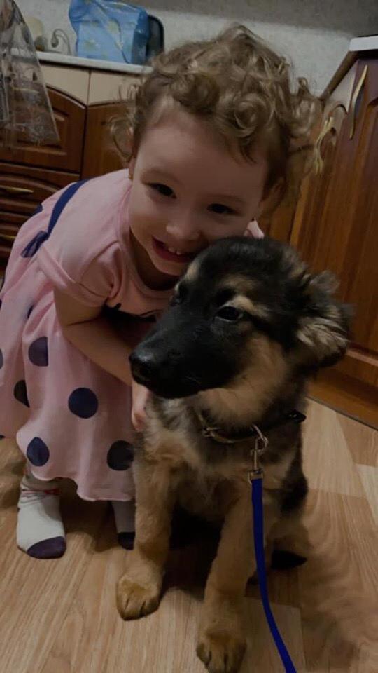 Сегодня на одну домашнюю собаку стало больше