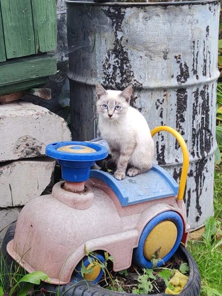 Отловленные бездомные котята, очень красивые окрас...