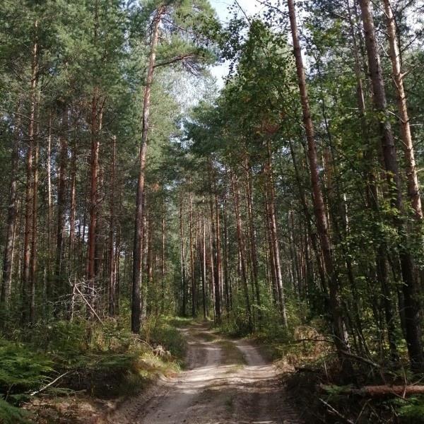 В Марий Эл с 19 июня ввели ограничение на пребывание в лесах