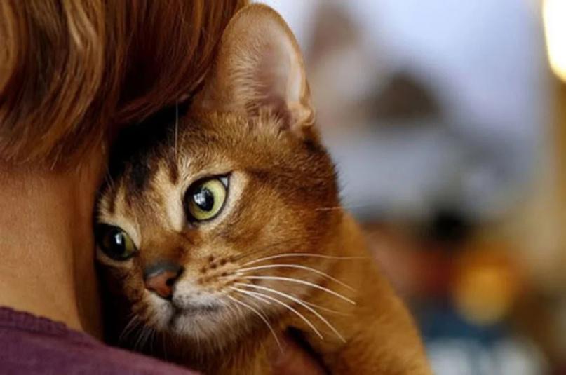 Народные поверья о котах.