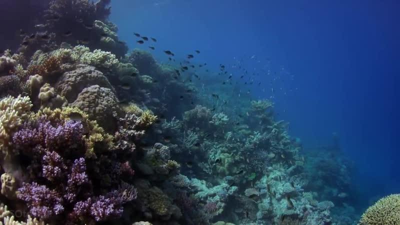 Большой Барьерный Риф Great Barrier Reef mp4
