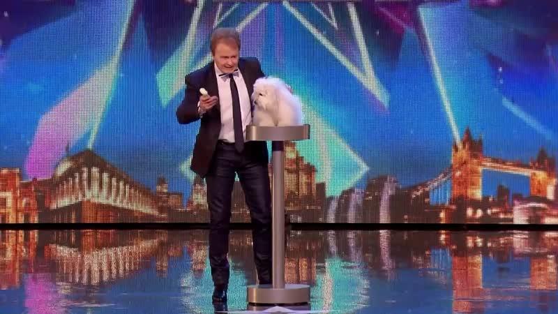 говорящая собачка на шоу талантов
