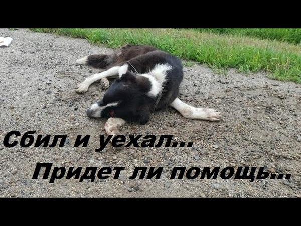 Сломана спина Аврора animal rescue