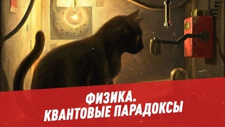 Квантовые парадоксы: почему нам так интересна судьба кота Шредингера - Физика