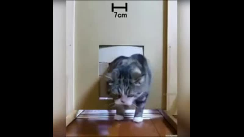 Кошки прям как жидкость😃