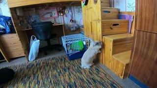 Первое знакомство Корицы с собаками
