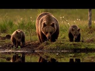 Новая дикая природа Европы/ Серия 3/Спасение медведей/ Saving Europe's Bears/ National Geographic