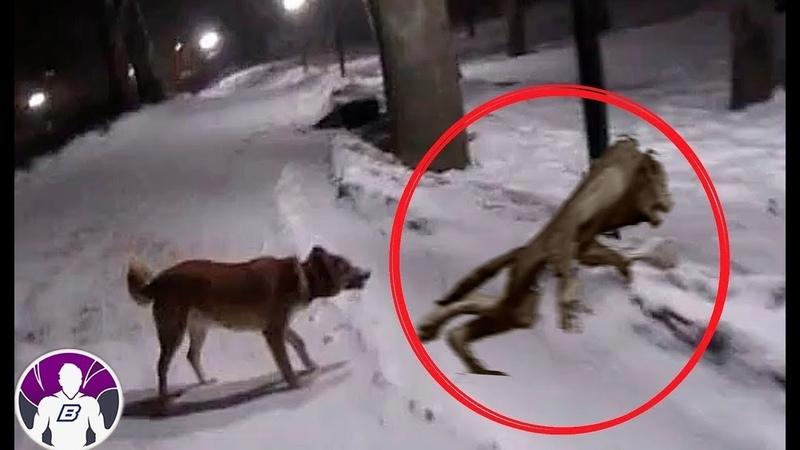 4 видео доказательства того что животные видят призраков