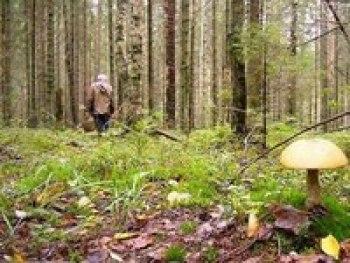 Бабушка, четвертые сутки находящаяся в лесу в Ивановской области, уже не может идти, но пытается ползти