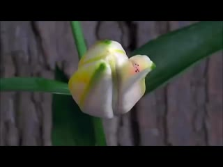 Наслаждаюсь я виденьем.Ах, какое наслажденье! Тёплый ветер навевает, вальс цветов в саду играет.Ах,какое это чудо - видеть..