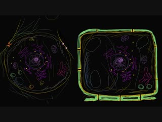 Строение растительной и животной клетки. Строение клетки. Биология (часть 4)