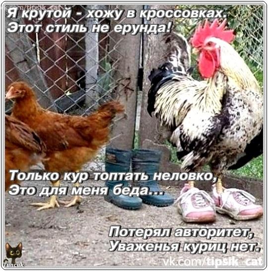 Убегает курица от петуха и думает если остановлюсь картинка