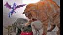ОЧЕНЬ СМЕШНЫЕ ЖИВОТНЫЕ Смешные видео с кошками Приколы про котов и собак