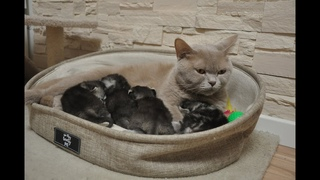 Mama Cat takes great care of your cute little babies